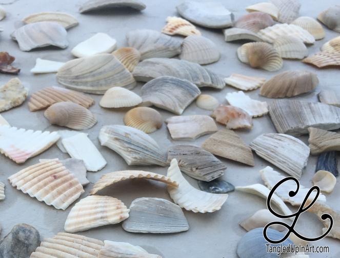 shells-before