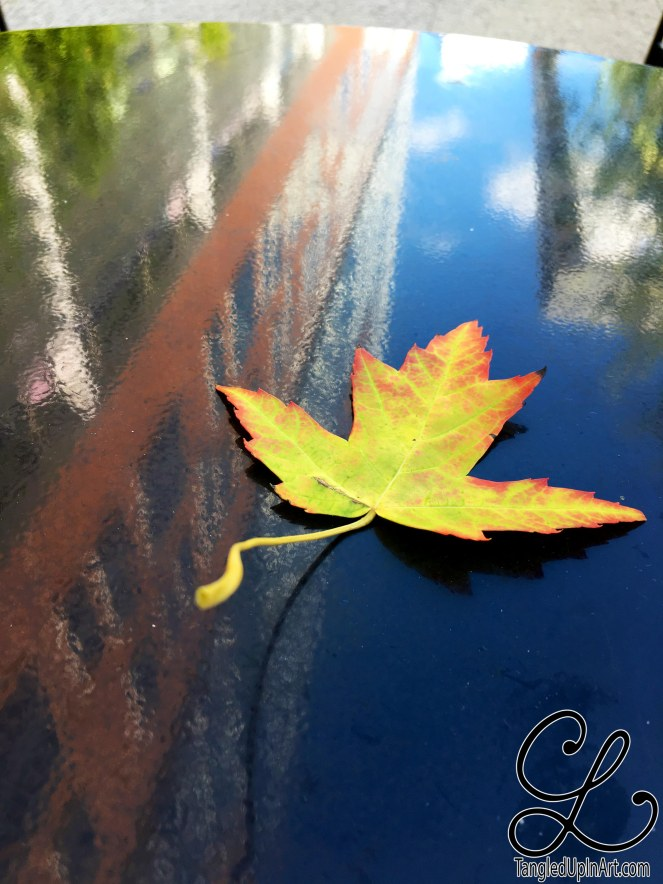 leaf-reflection